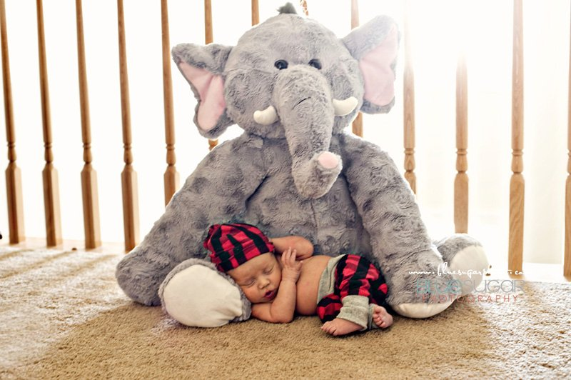 newborn picture with stuffed animal